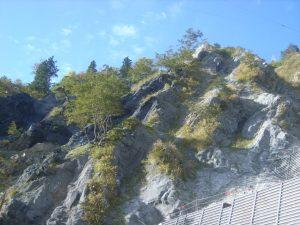 この工法は樹木の根の伸長を妨げないため地山の安定した場所では立ち木を残したままの施工も可能で、あり、施工後に金網の間から自生植物の植生も見受けられる。