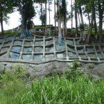 立木を伐採せず施工